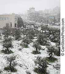 Snowfall on Olives and Road
