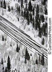 Snowfall on road with trees. - High angle view of snowfall...