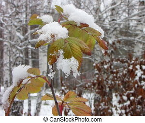 snowfall., premier