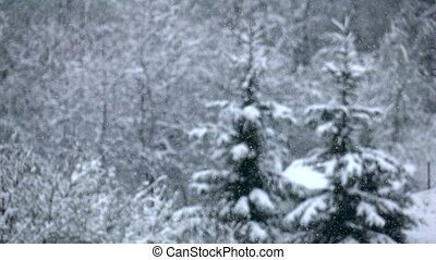 Snowfall quietly falls on branches of trees. Winter, slow...