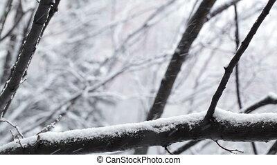 Snowfall. - Snowfall and the trees.