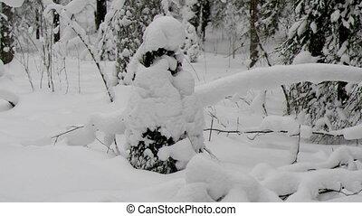 snowfall . - snowfall .Winter landscape.Winter beauty scene....