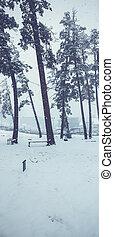 Snowfall. Trees in the snow. Mountain ski resort Bakuriani