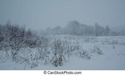 snowfall .Winter landscape. -   snowfall .Winter landscape.