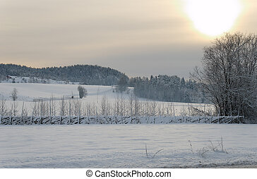 Snowfields under the Sun