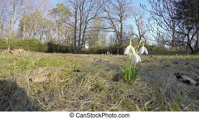 snowflake flower bloom - beautiful spring flowers blooms...
