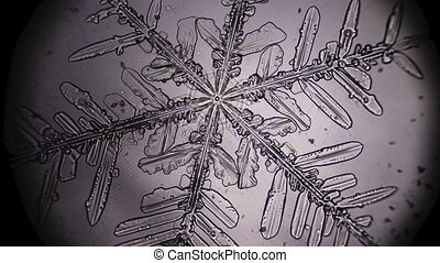 Snowflake in microscope rack focusing