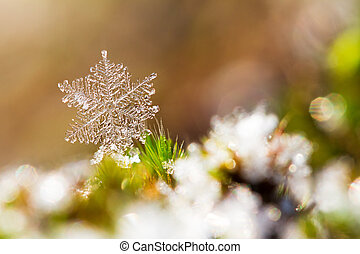 Snowflake macro - Beautiful close up image of a snowflake on...