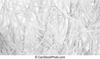 snowflakes falling at winter frozen bush branches background