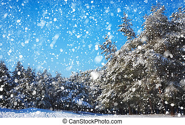 Snowflakes falling from the sky. Spruces covered with hoarfrost and snow. Winter forest