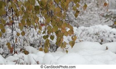 Snowflakes falling, snowfall. Scenic winter landscape. Trees...