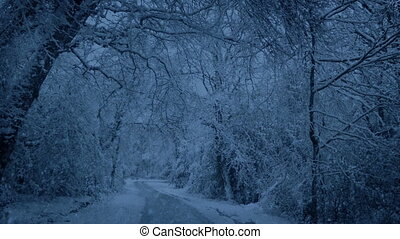 Snowing On Road Through Woods In The Evening