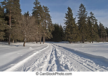 Snowmobile trail in winter forest