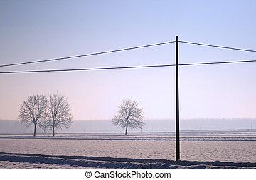 Snowscape - Landscape of snow, trees and a light pole