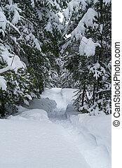 snowshoe, rastro, madeiras