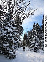 snowshoeing, 冬の景色