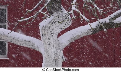 snowstorm in winter village