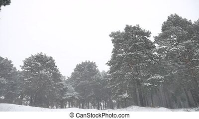 snowstorm the woods snowing nature blizzard winter,...