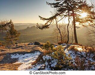 snowy の木, 滞在, 暖かい, によって, 森林, sunrays, 行きなさい, mountain., 最初に