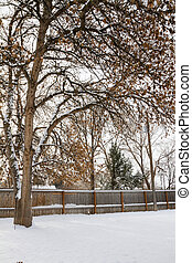 Wide angle view of a large tree growing in a backyard while the yard is covered in snow.