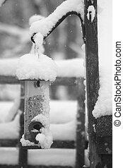 snowy birdfeeder - birdfeeder
