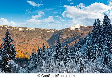 snowy conifer forest in mountains. beautiful nature scenery...