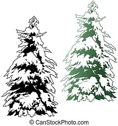 Snowy Coniferous Tree 02 - colored illustration