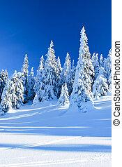 Snowy coniferous trees