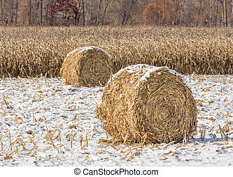 Round crop bales on the edge of a corn field are topped with a light snow fall in late autumn.