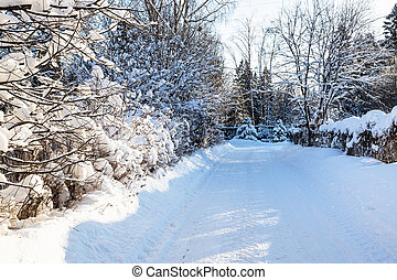 snowy country road between hedgerow in village