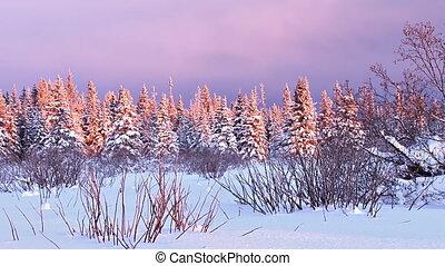 Snowy Darkening Alaskan Sunset - Time lapse of wintry spruce...