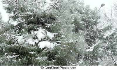 """snowy day, snow on pine tree"""