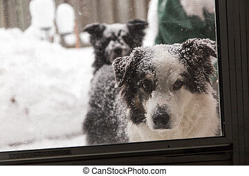 snowy dogs at the screen door