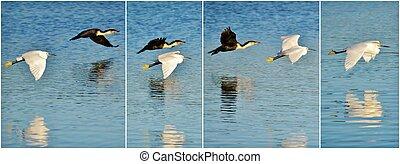 Snowy Egret and Cormorant