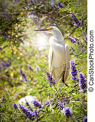 Snowy Egret Bird In Lilac Tree - Beautiful White Snowy Egret...