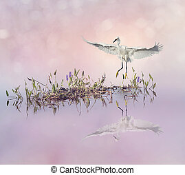 Snowy Egret in flight over lake