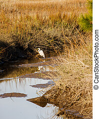 Snowy Egret in Water of Wetland Marsh