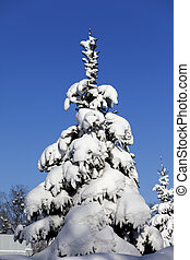 Snowy fir on background of blue sky