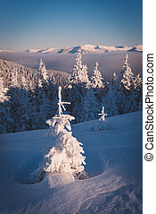 Snowy fir tree in mountains
