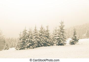 snowy foggy forest