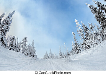 Snowy forest in mountains blue sky