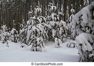 Snowy forest in the evening