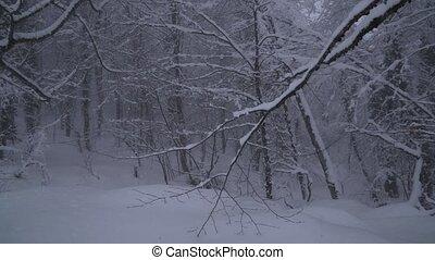 Snowy forest on North slope Aibga Ridge Western Caucasus at...