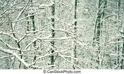 Snowy forest or park in winter with tree branches gently...