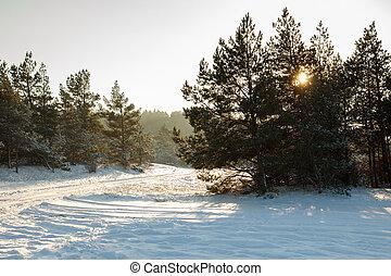 Snowy forest scene