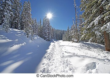 Snowy Forest Trail Path in Colorado Backcountry. Cold and...