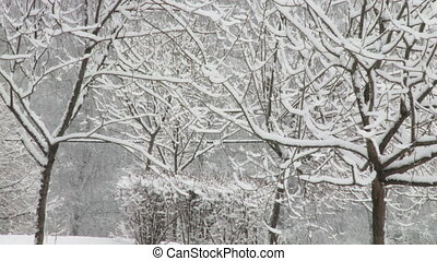 Snowy forest. Zoom out