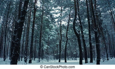 Snowy forest nature view in winter natural landscape frozen wood, fall ice day beautiful aerial gimbal drone steady shot branch mist story park mountains