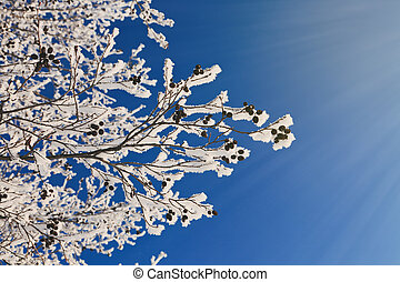 snowy frosty sunny winter background