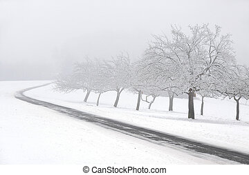 Snowy fruit trees with fog at Engenhahn in the Taunus, Hesse, Germany